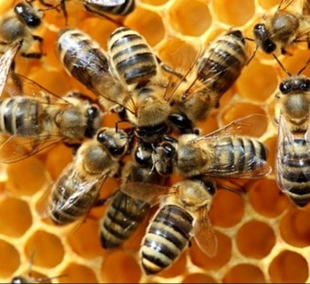 Sito di incontri con ape singola